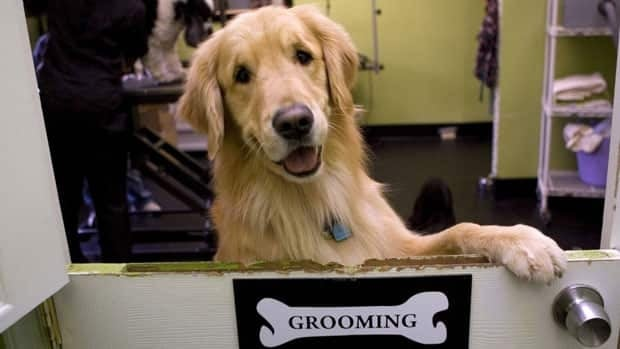 Currently, there are no regulations for the dog grooming industry. However people can get certified to become a dog groomer, which involves taking a number of written and practical exams.