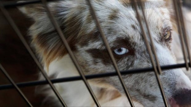 Animal rights advocate Kasey Dunn has started a petition to end the sale of mass market animals in Hamilton pet stores. Her petition already has over 2,000 signatures.