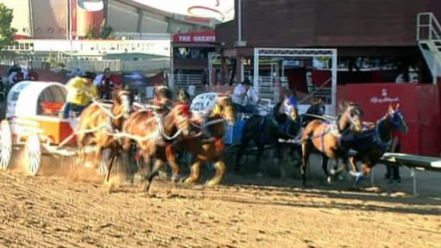 Second Horse Dies At Calgary Stampede Cbc Sports