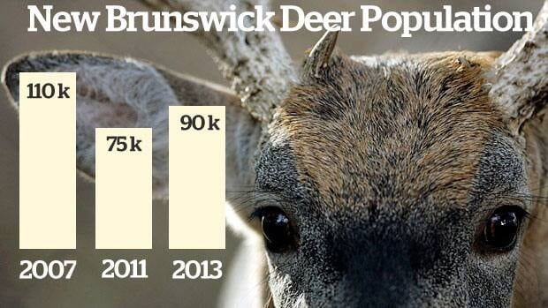 New Brunswick's deer population has jumped 15 per cent in the past year, but is lower than previous years, figures show.