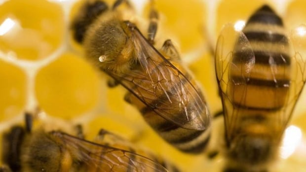 Nova Scotia beekeepers are reacting to new federal regulations aimed at reducing honeybees' exposure to pesticides that are suspected of killing the insects in large numbers.
