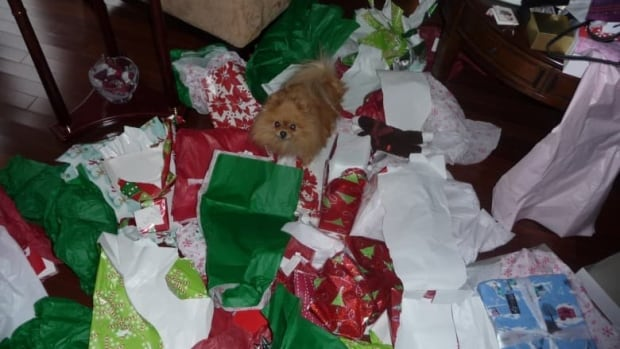 When your Christmas wrapping has gone to the dogs, don't clean it up by tossing it all in the recycling bin.