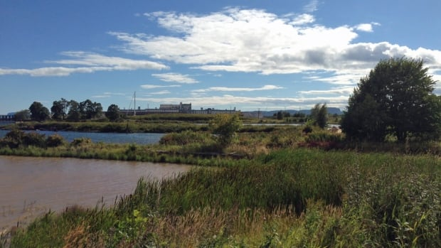 A Thunder Bay waterfront development project that will start this fall includes expanding a marshy area near the Pool 6 site.