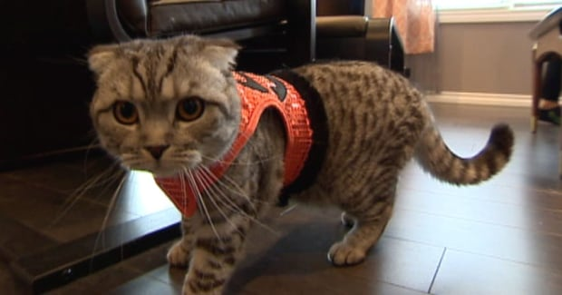 Sask. pet owners - buys most online products