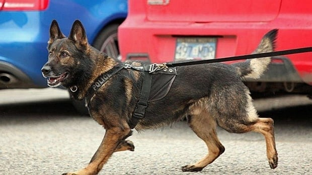 The Supreme Court of Canada will rule Friday on two cases that are expected to clarify the rules around the use of police drug-sniffing dogs.