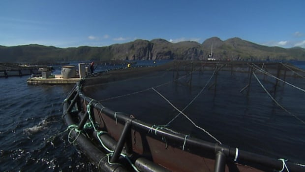 There's a dispute brewing over how many people the Newfoundland and Labrador aquaculture industry actually employs.