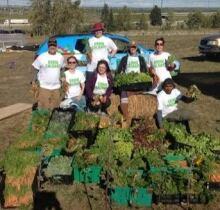 Grow Calgary harvest