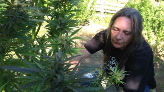 Cannabis Patients Alliance: Medical Marijuana Licences No Longer A Home-grown Option