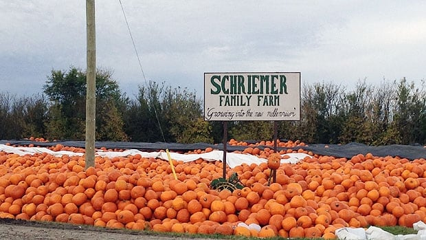 A half-million pumpkins have been harvested at Schriemer Family Farm this fall.