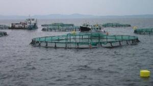 hi-fish-farming--852