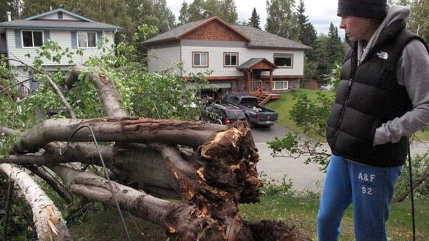 Diana Patton stands near two trees that fell over in her front yard during a wind storm in Anchorage, Alaska, Wednesday, Sept. 5, 2012. The storm knocked out power in parts of the city, uprooted trees and closed schools.