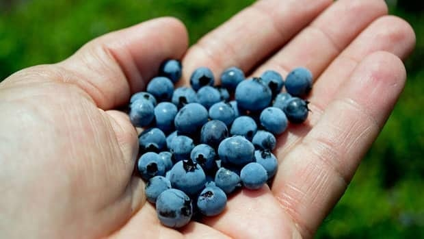 David Hatt, owner of Granite Town Farms in St. George, says because the berries ripened so quickly, the blueberry season will probably end about a week or two early.