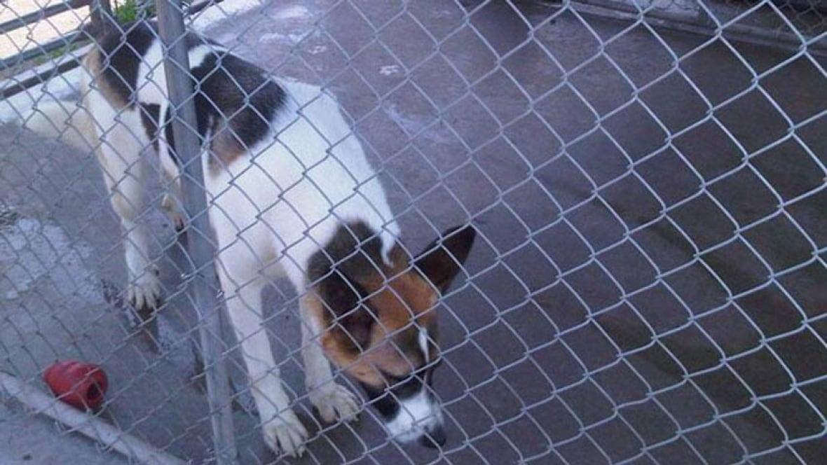 Brunswick Animal Shelter Dogs