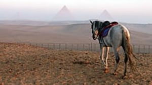 mi-one-pyramid-pony-200