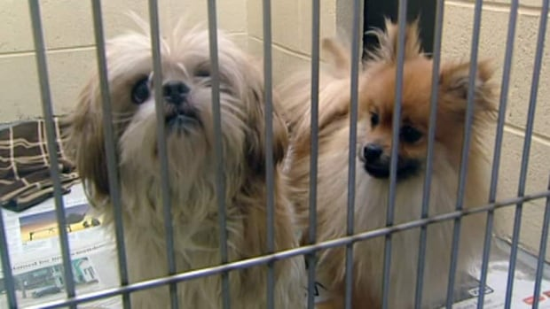 The SPCA is aware of 56 rescues operating in the province.