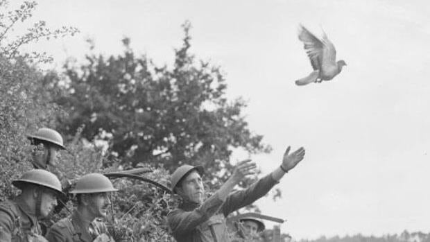 Allied troops used 250,000 carrier pigeons to deliver messages during the Second World War.
