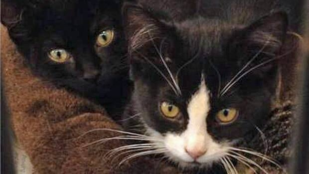 """The Windsor-Essex County Humane Society calls it the """"Black Animal Syndrome"""" and will slash the adoption fee by 50 per cent for all furry creatures that are mostly black."""