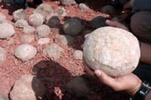 sm-220-dinosaur-eggs-2395092