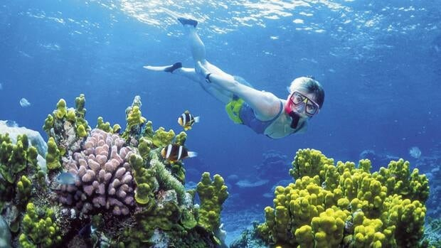 A diver snorkels in the Great Barrier Reef off Australia's Queensland state in 2002. Australia has announced the creation of the world's largest network of marine reserves covering 3.1 million square kilometers of ocean including the entire Coral Sea. .