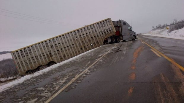 This livestock truck went off the road on Highway 40 west of the Battlefords.
