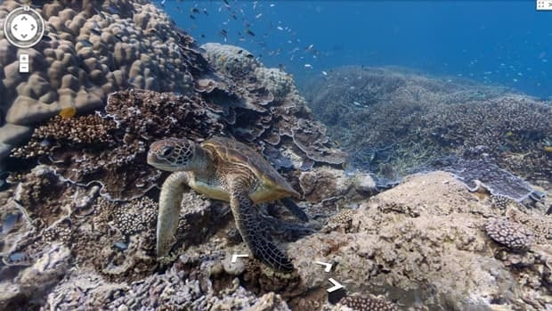 A turtle is seen underwater near Heron Island along Australia's Great Barrier Reef. Google's new underwater maps feature lets users explore the ocean's depths.