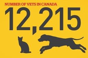 Pet stats 2