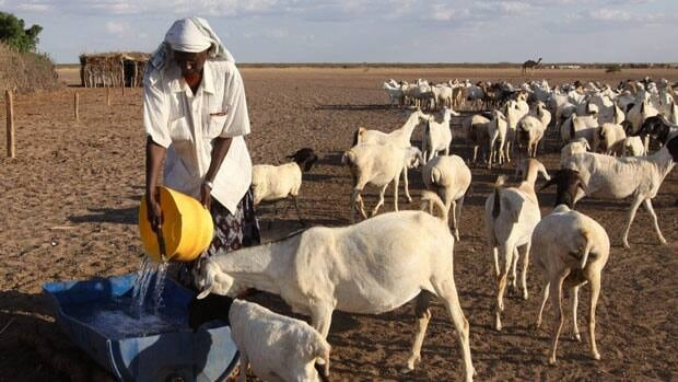 A man pours water for goats to drink at the site of a borehole in Dertu, Kenya. In the country's southeast, at least 48 people have died in clashes between two pastoral communities.