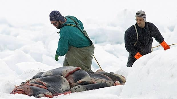 Canada, which has argued that its annual seal hunt is conducted humanely, is challenging the European Union's ban on the import of seal products. A WTO dispute panel will be assembled to hear the case.
