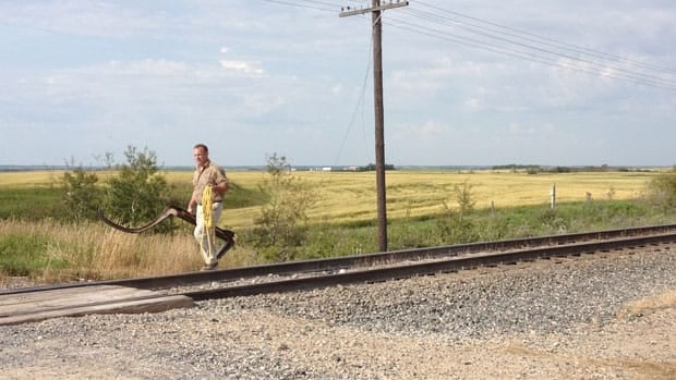 The crash happened at a level crossing near Broadview, Sask., which is about 155 kilometres east of Regina.