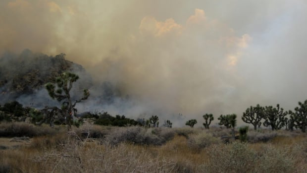 In this photo taken August 9, 2012 released by the San Diego County Fire Authority, firefighters attack a blaze near Chihuahua Valley Road in Northern San Diego County.