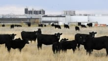 XL Foods recall lawsuit reaches tentative deal for refunding beef customers