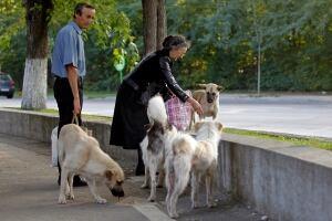 Romania-stray-dogs-fed