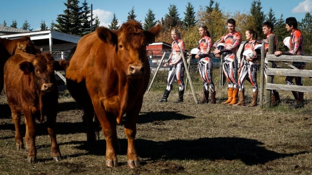 Luge racers look over a cow and calf at a cattle ranch near Okotoks, Alta., on Monday. Cattle rancher Mark Barnert donated a cow from his farm to six members of the national team.