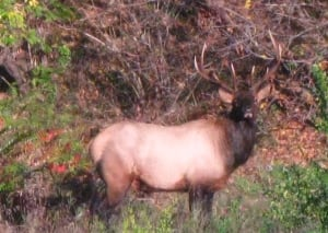 Elk sighting City Centre building Scott Street