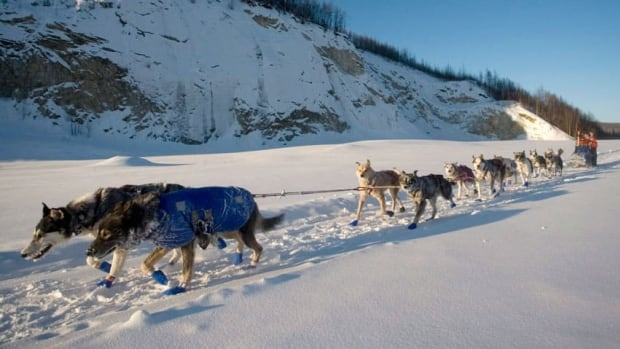 'The ideal temperature would be -20,' says the organizer of the Yukon Arctic Ultra, but today's forecast is calling for 10 C in Whitehorse, and both the Yukon Quest and the annual endurance foot race are just two weeks away.
