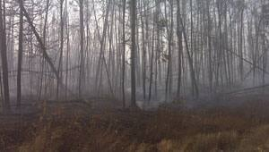 mi-burned-trees