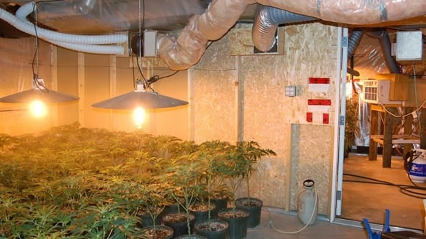 New research questions the automatic removal of children living in marijuana grow ops, finding they may not be exposed to any alarming health risks.