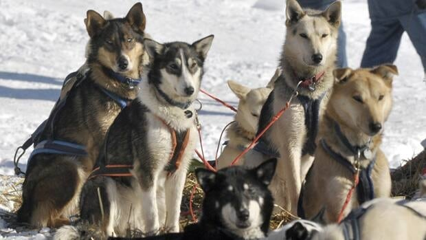 The slaughter of sleg dogs in northern Quebec decades ago harmed the Inuit way of life, Jean Charest's government officially acknowledged on Monday.
