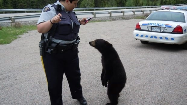 An RCMP officer face-to-face with a bear in Terra Nova National Park in central Newfoundland.