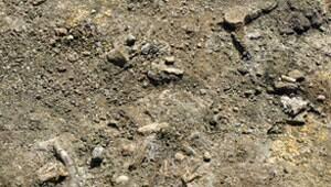 mi-mososaur-bones