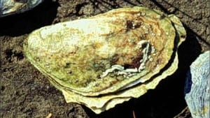 pei-hi-oyster-852