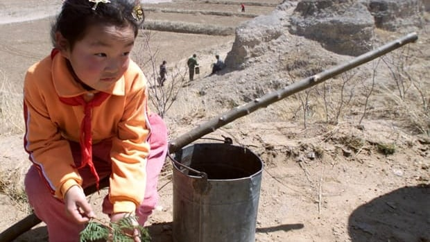 A primary student takes part in an afforestation project in China. Afforestation involves planting trees over poor croplands in order to boost the amount of carbon dioxide absorbed from the air.