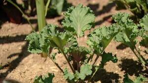 ns-hi-vegetable-garden