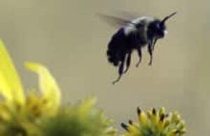 cgy-bumblebee-ap
