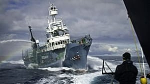 tp-japan-whaling-00171943