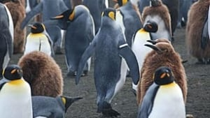 tp-penguins-universite-de-strasburg