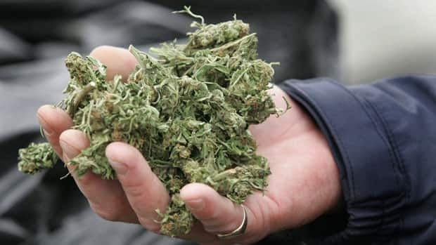 The RCMP announced a new initiative to combat marijuana grow operations on Wednesday.