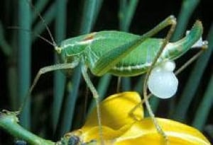 sm-220-katydid-mccartney