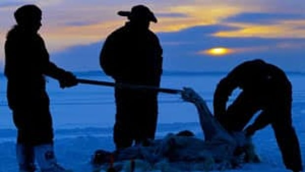 Inuit hunters (from left to right) Meeka Mike, Lew Philip and Joshua Kango skin a polar bear on the ice as the sun sets during the traditional hunt on Frobisher Bay near Tonglait, Nunavut Sunday February 2, 2003. Many Inuit blend modern life with traditional ways, going out in the dead of winter in search of nanuq, the polar bear.