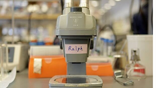 The microscope that Ralph Steinman used in the early 1970s to make his discovery about dendritic cells is displayed in his lab in New York.